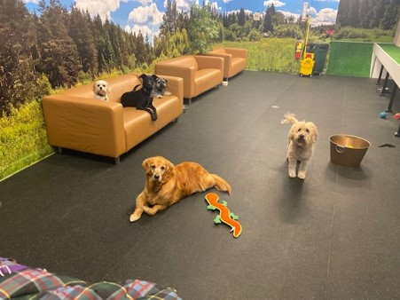 Five dogs in daycare at the Urban Hound at St Francis House.